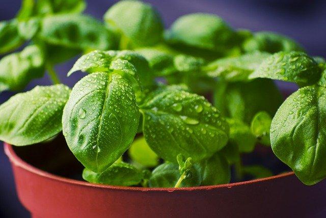 Akcesoria do kuchni: zioła