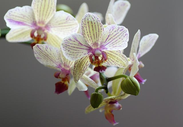 Kwiaty doniczkowe: storczyki