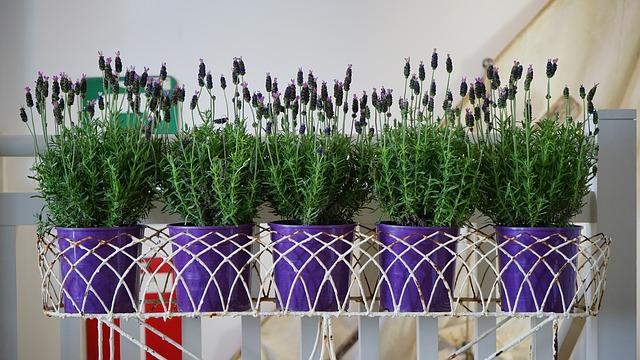 Kwiaty doniczkowe: ciekawy akcent dekoracyjny
