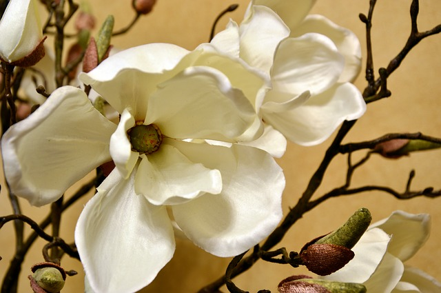 sztuczne kwiaty: jakie wybrać