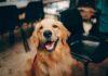 Przysmaki dla psów